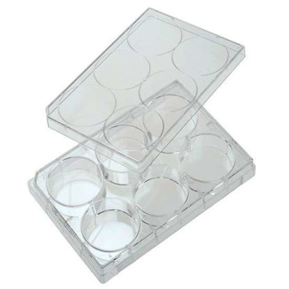 Cole-Parmer 6-Well Treated Cell Culture Plate with Lid; 100/cs